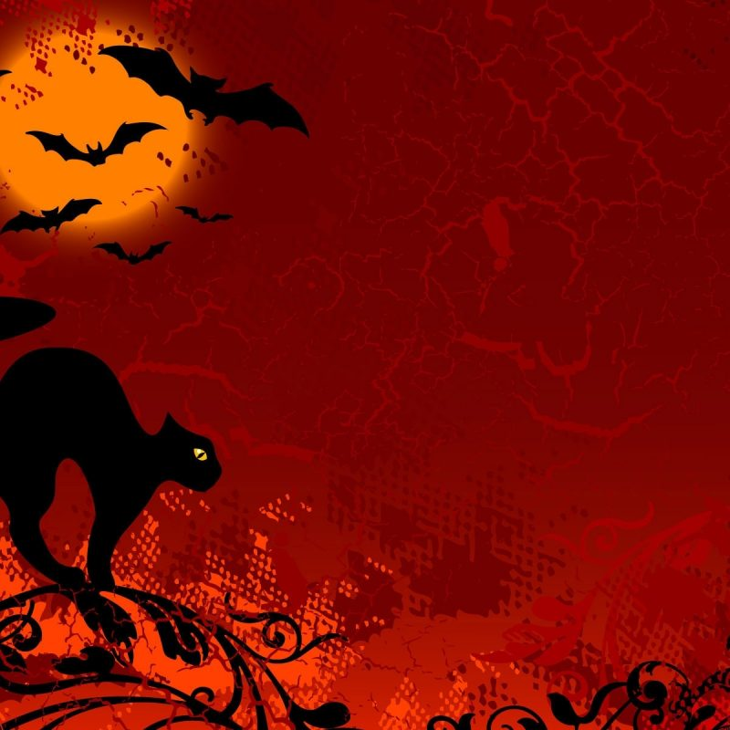 10 Latest Halloween Cat Desktop Wallpaper FULL HD 1080p For PC Desktop 2018 free download free halloween wallpapers images long wallpapers 800x800