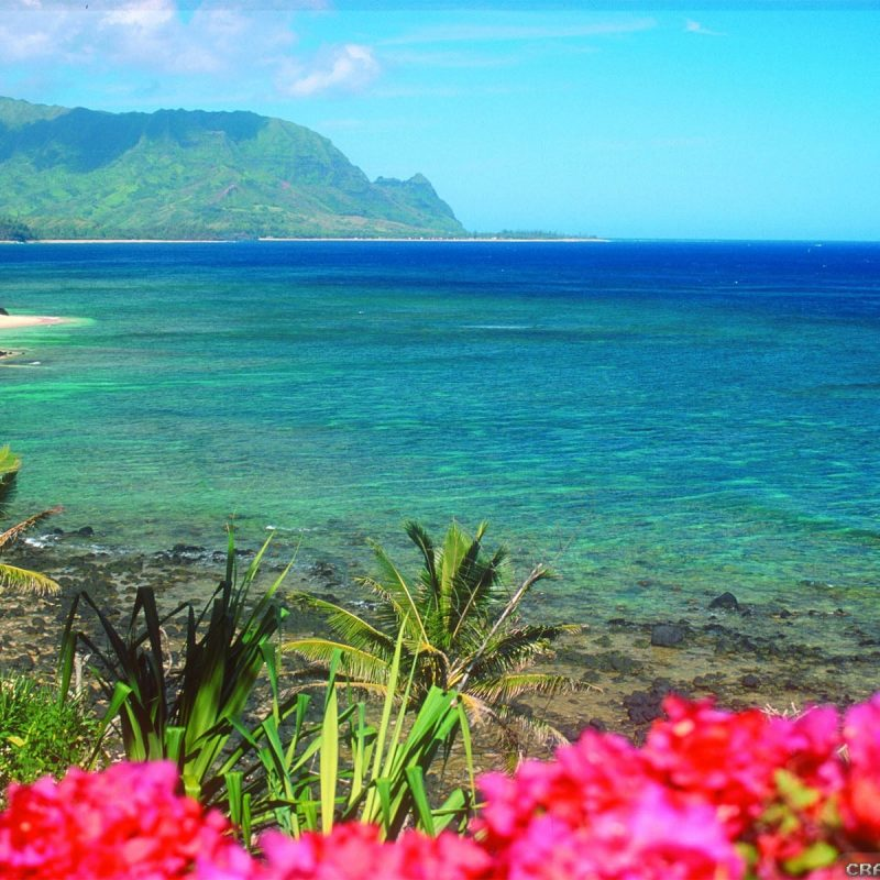 10 New Hawaii Beach Pictures Wallpapers FULL HD 1920×1080 For PC Background 2018 free download free hawaii wallpapers high resolution long wallpapers 800x800