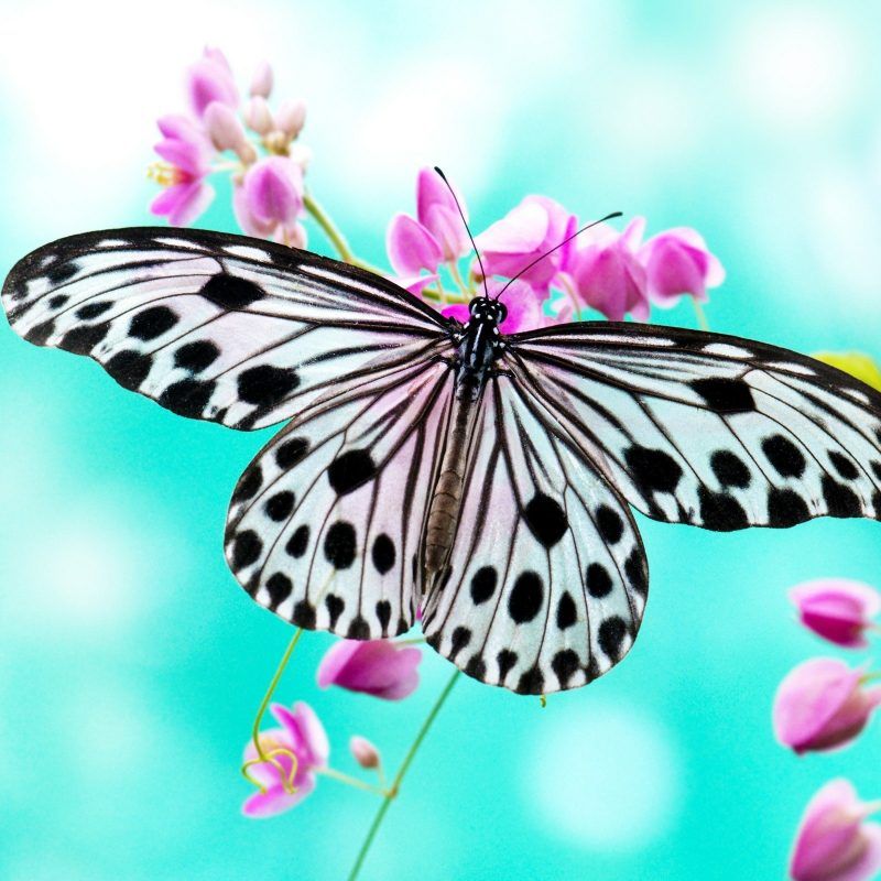 10 Most Popular Wallpapers Butterfly Free Download FULL HD 1080p For PC Background 2020 free download free hd black white butterfly macro wallpaper photos download 800x800