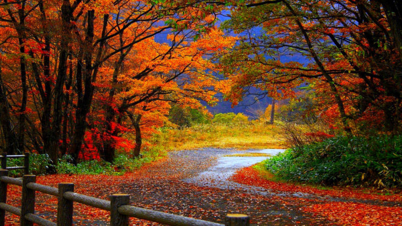 10 Top Autumn Hd Wallpaper 1080P FULL HD 1080p For PC Desktop 2020 free download %name