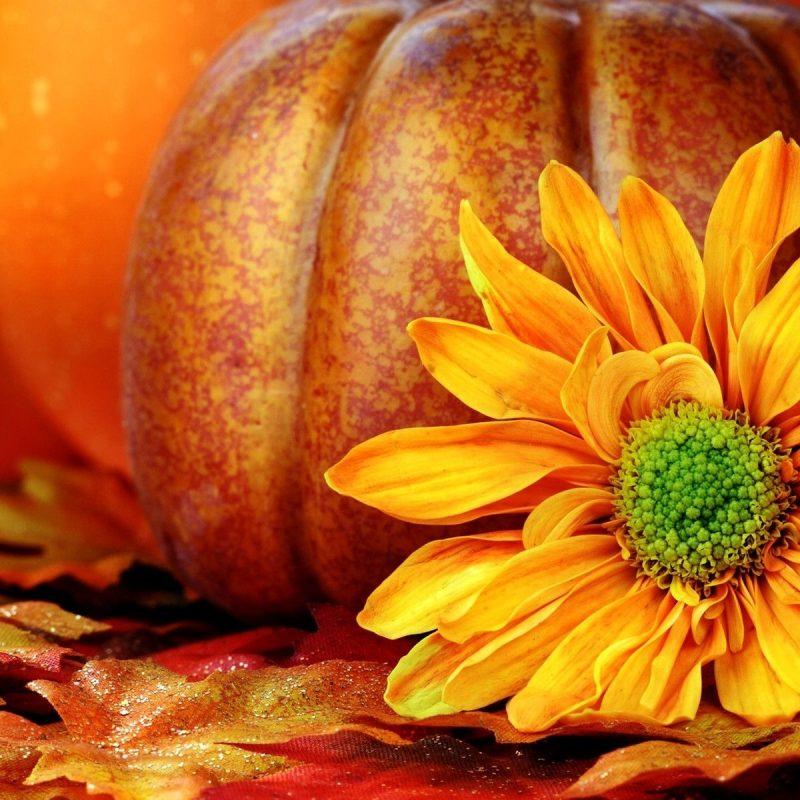 10 Top Fall Pumpkin Wallpaper Hd FULL HD 1920×1080 For PC Background 2018 free download free hd pumpkin wallpapers pixelstalk 1 800x800