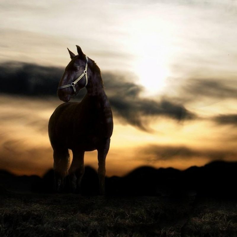 10 Latest Horse Backgrounds For Computer FULL HD 1920×1080 For PC Desktop 2021 free download free horse wallpapers for computer wallpaper cave 1 800x800