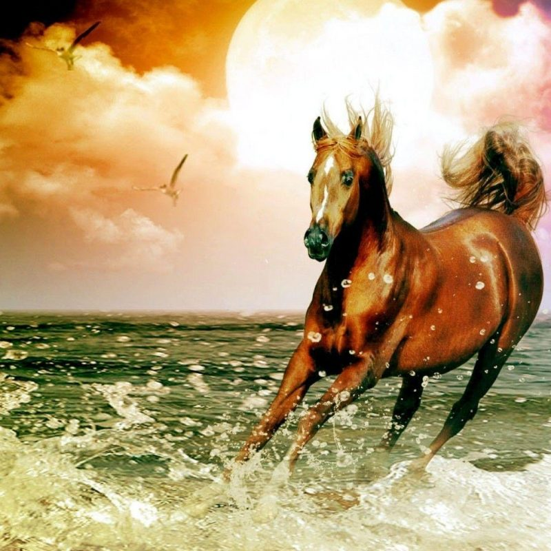10 Latest Horse Backgrounds For Computers FULL HD 1920×1080 For PC Background 2020 free download free horse wallpapers for computer wallpaper cave 800x800
