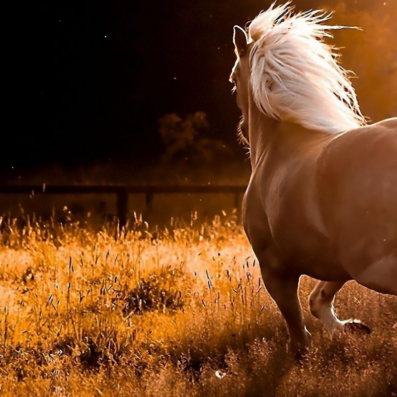 10 Latest Horse Backgrounds For Computer FULL HD 1920×1080 For PC Desktop 2021 free download free horse wallpapers for computer wallpaper cave images 1 800x800