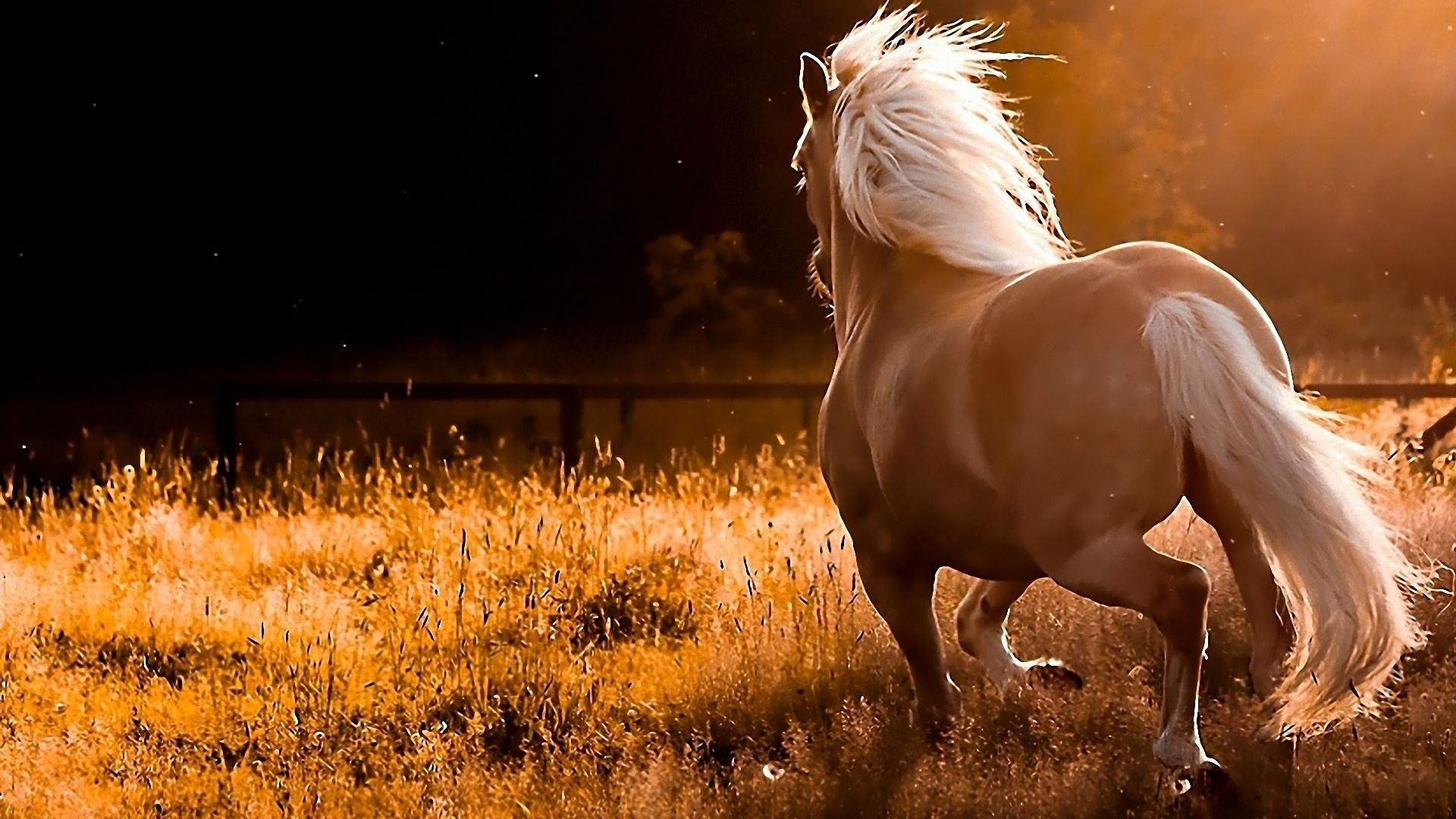 free horse wallpapers for computer - wallpaper cave | images
