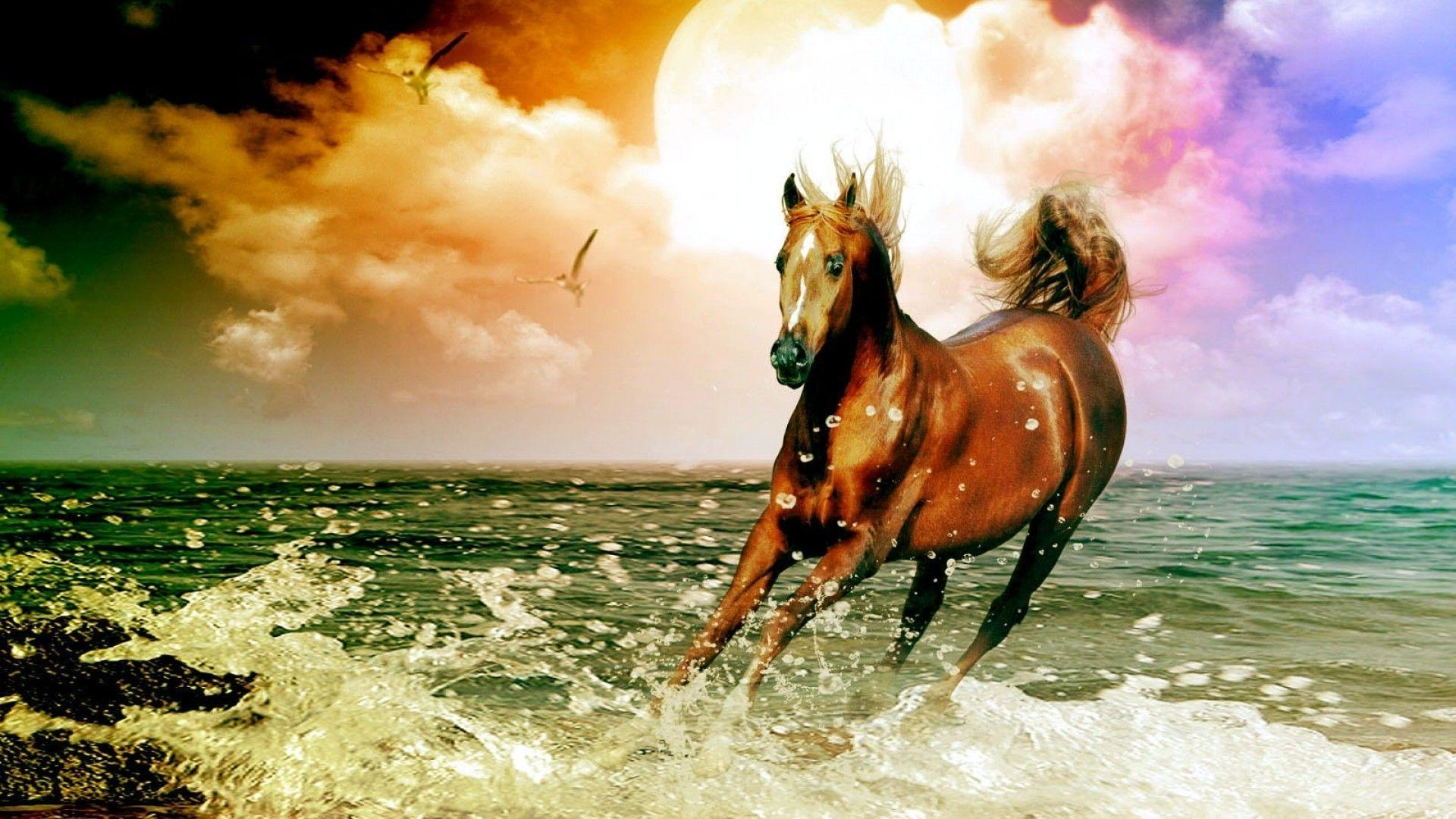 free horse wallpapers for computer - wallpaper cave