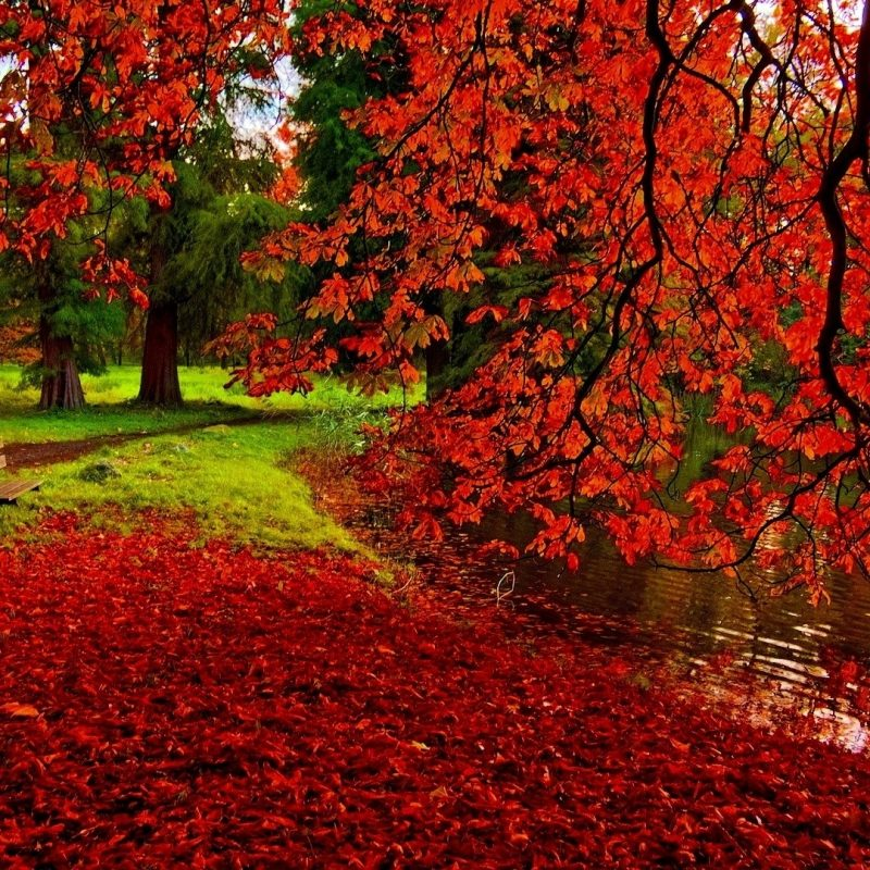 10 Best Fall Wallpapers For Desktop FULL HD 1080p For PC Background 2021 free download free images fall desktop wallpapers media file pixelstalk 1 800x800