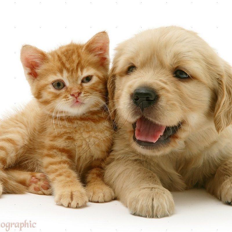 Kitten And Puppy Wallpaper HD Resolution Animals Wallpaper HD