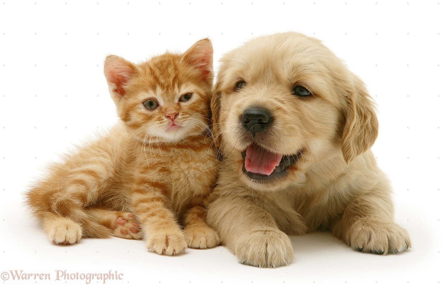 free kitten and puppy wallpaper desktop background « long wallpapers
