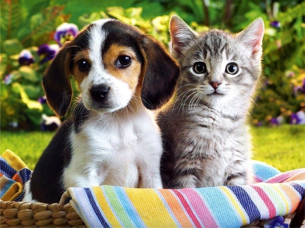 free kitten and puppy wallpaper widescreen « long wallpapers