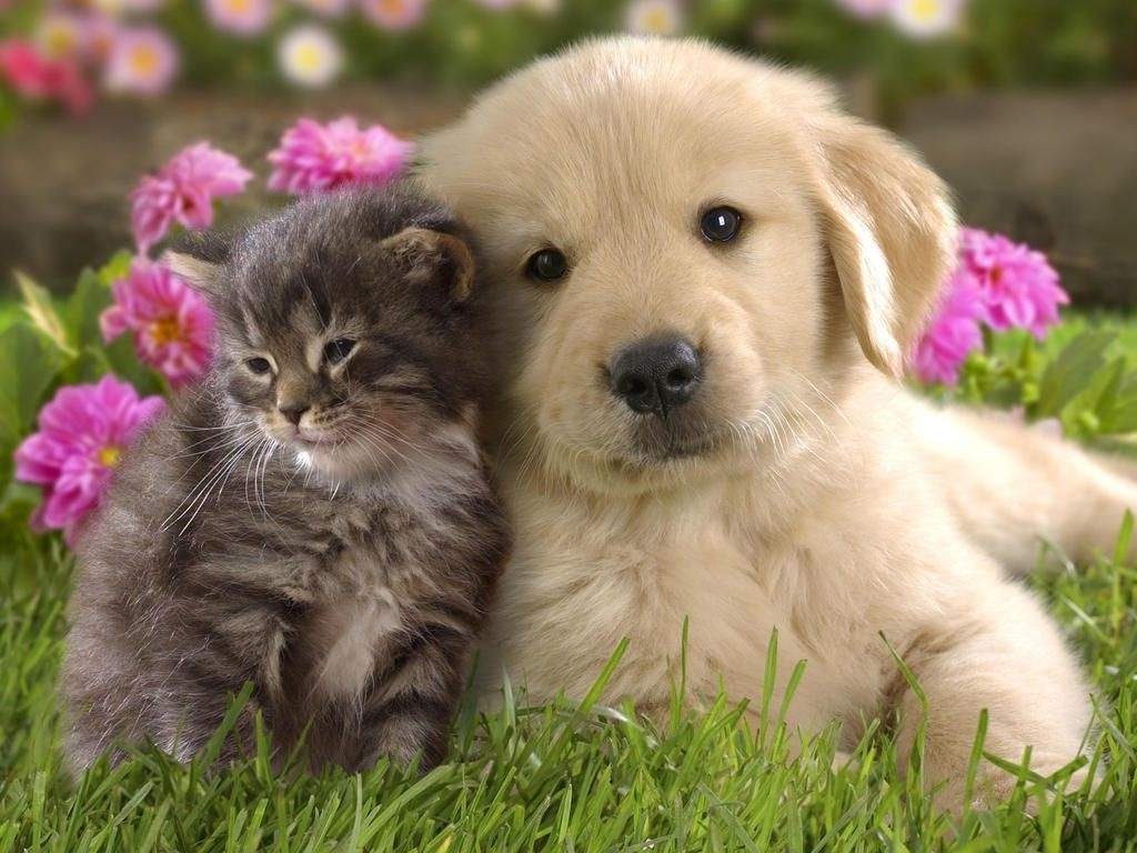 free kitten and puppy wallpapers 1080p « long wallpapers