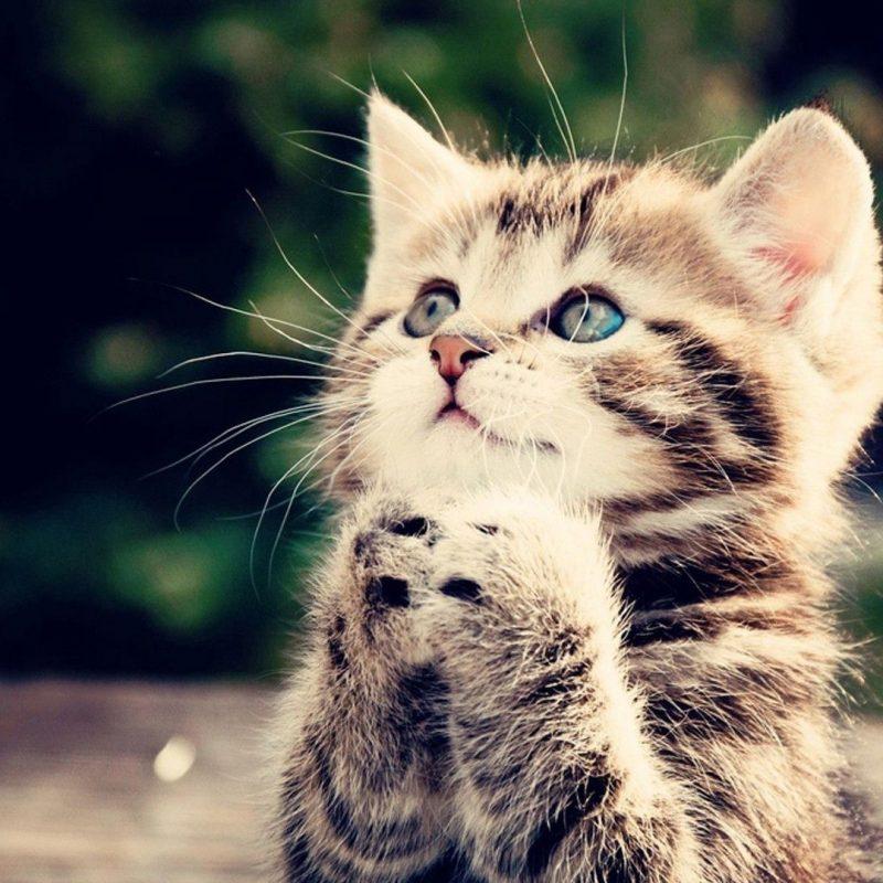 10 Best Cute Kittens Wallpapers For Desktop FULL HD 1080p For PC Desktop 2021 free download free kitten wallpapers long wallpapers 800x800