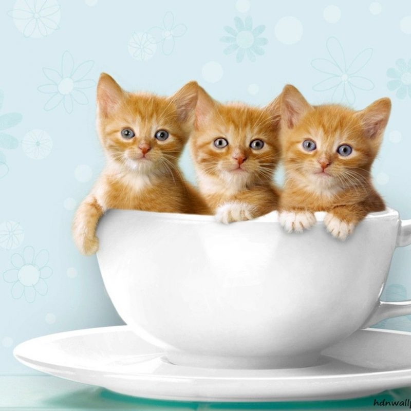 10 Best Cute Kittens Wallpapers For Desktop FULL HD 1080p For PC Desktop 2021 free download free kitten wallpapers widescreen long wallpapers 800x800