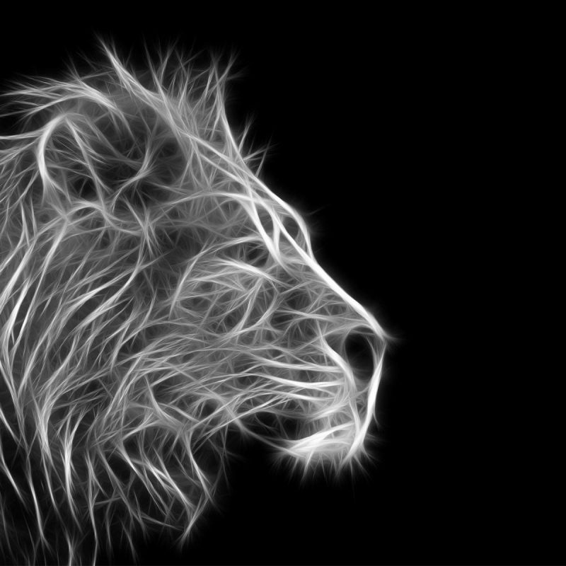 10 Most Popular Angry Lion Wallpaper Black And White FULL HD 1080p For PC Desktop 2020 free download free lion black and white backgrounds long wallpapers 800x800