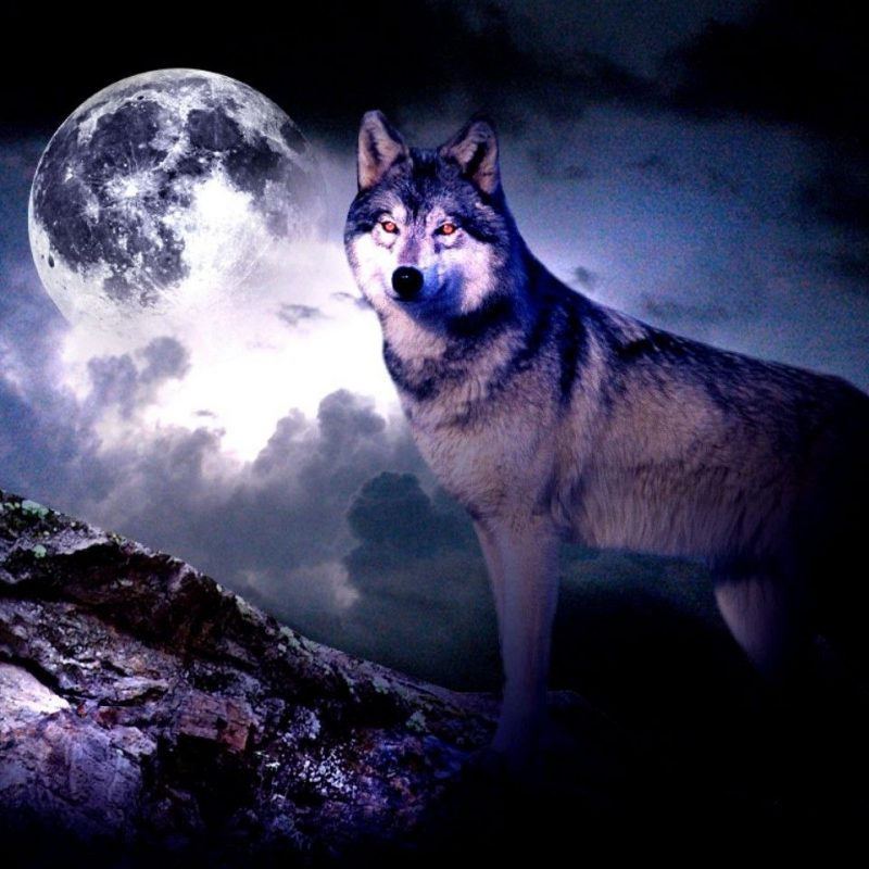 10 Latest Wolf And Moon Wallpaper FULL HD 1080p For PC Desktop 2021 free download free moon wallpapers desktop images full hd wallpapers pinterest 800x800