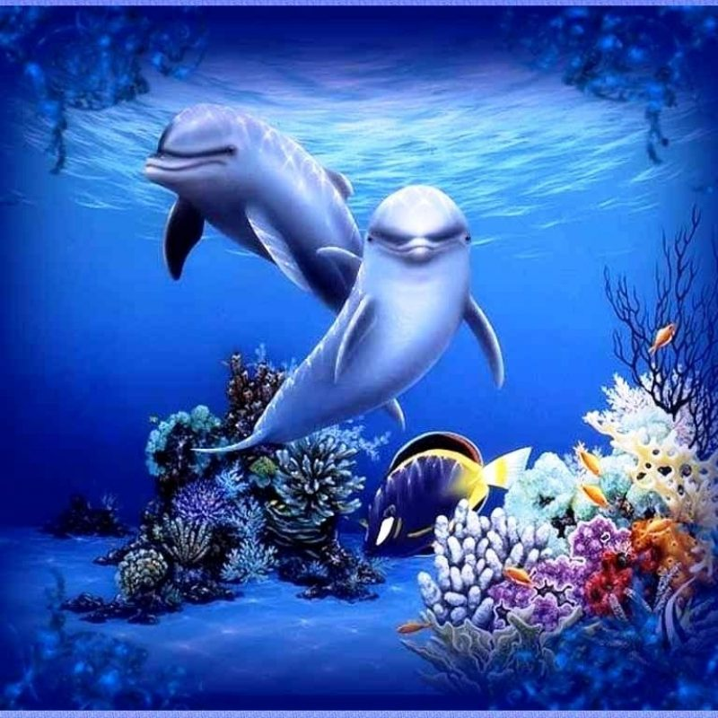 10 Best Dolphins Wallpaper Free Download FULL HD 1920×1080 For PC Background 2021 free download free moving dolphin screensavers 3d moving wallpapers for desktop 800x800