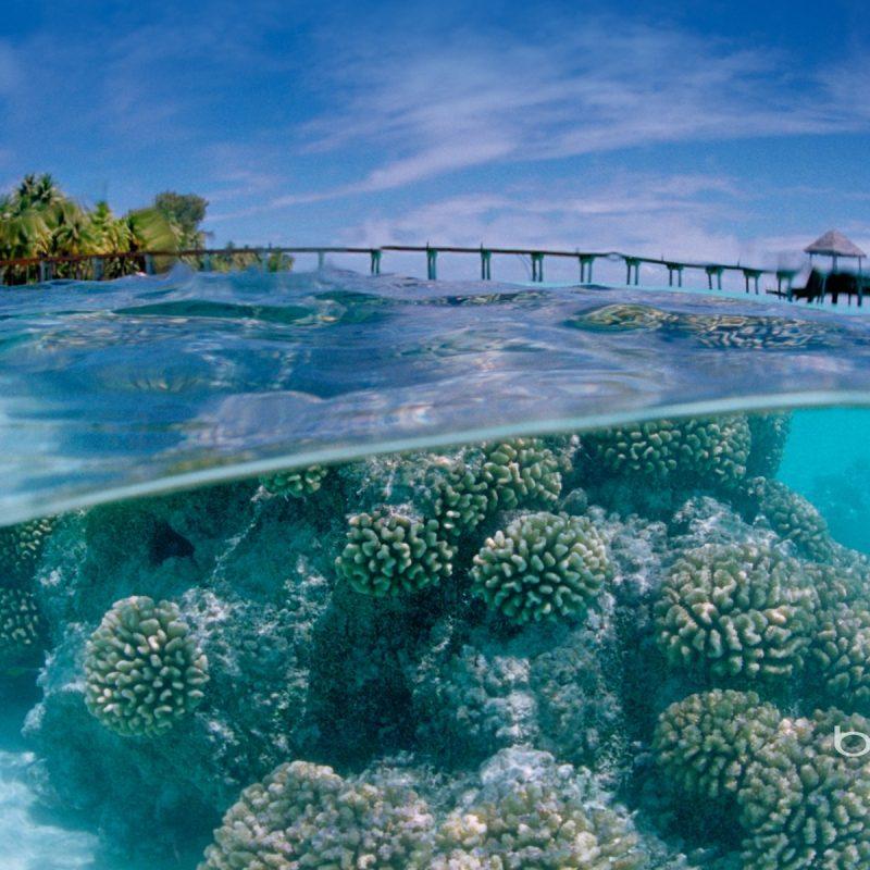 10 Best Ocean Backgrounds For Desktop FULL HD 1920×1080 For PC Background 2018 free download free ocean background long wallpapers 800x800