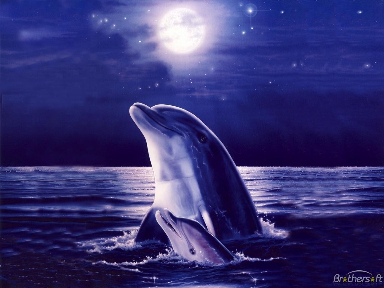 free purple dolphin wallpaper background « long wallpapers
