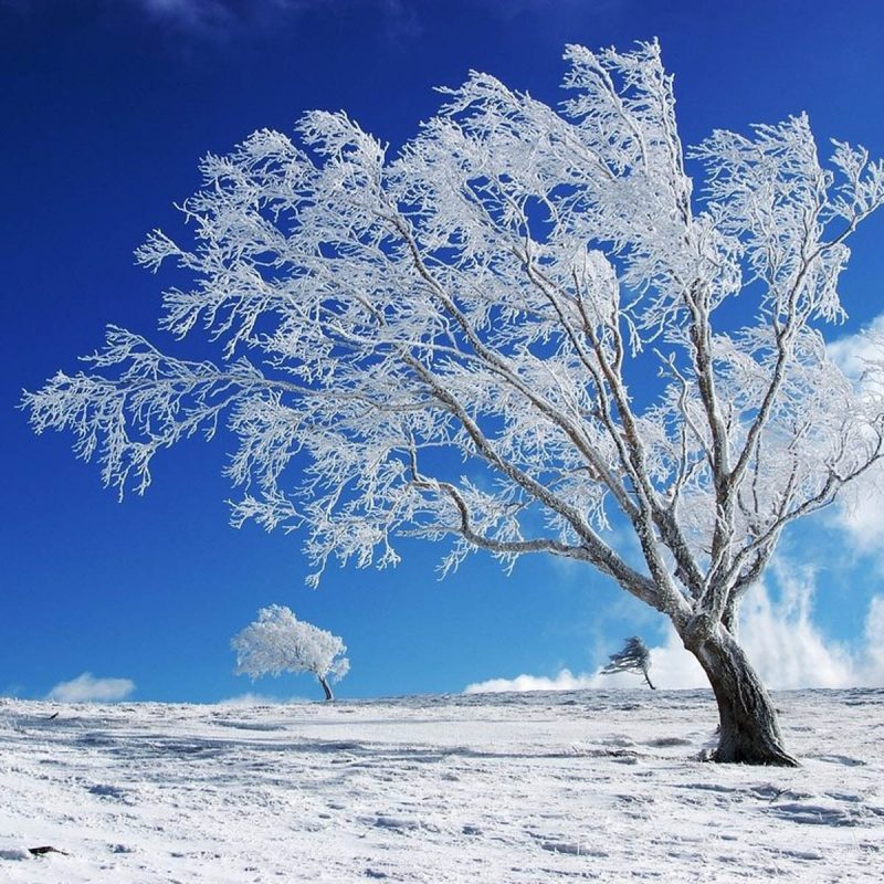 10 Latest Seasonal Pictures For Desktop FULL HD 1080p For PC Background 2021 free download free seasonal desktop wallpapers wallpaper cave 1 800x800