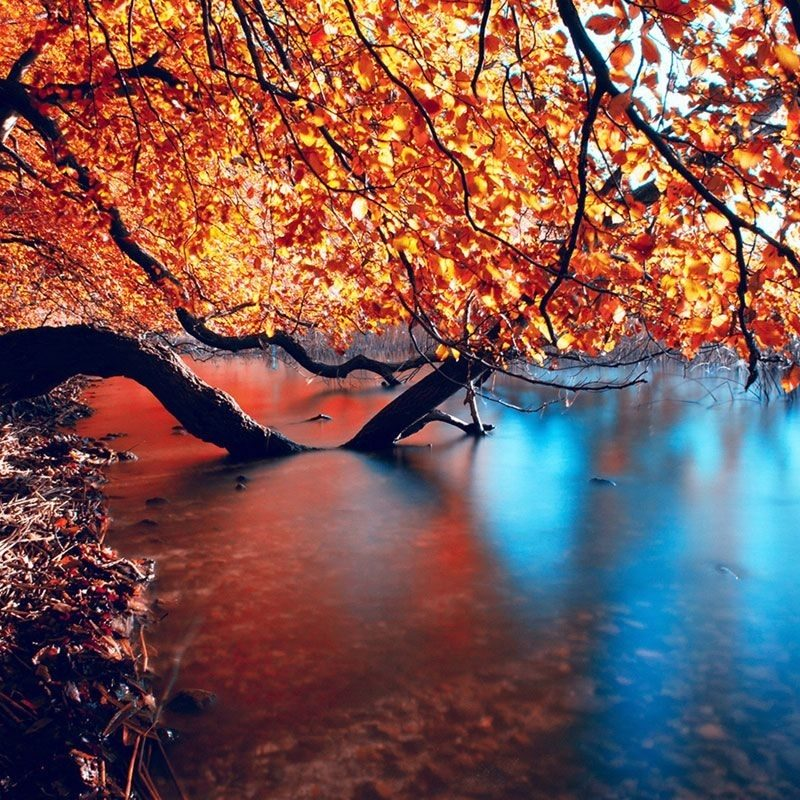 10 Latest Seasonal Pictures For Desktop FULL HD 1080p For PC Background 2020 free download free seasonal wallpaper epic car wallpapers pinterest 1 800x800