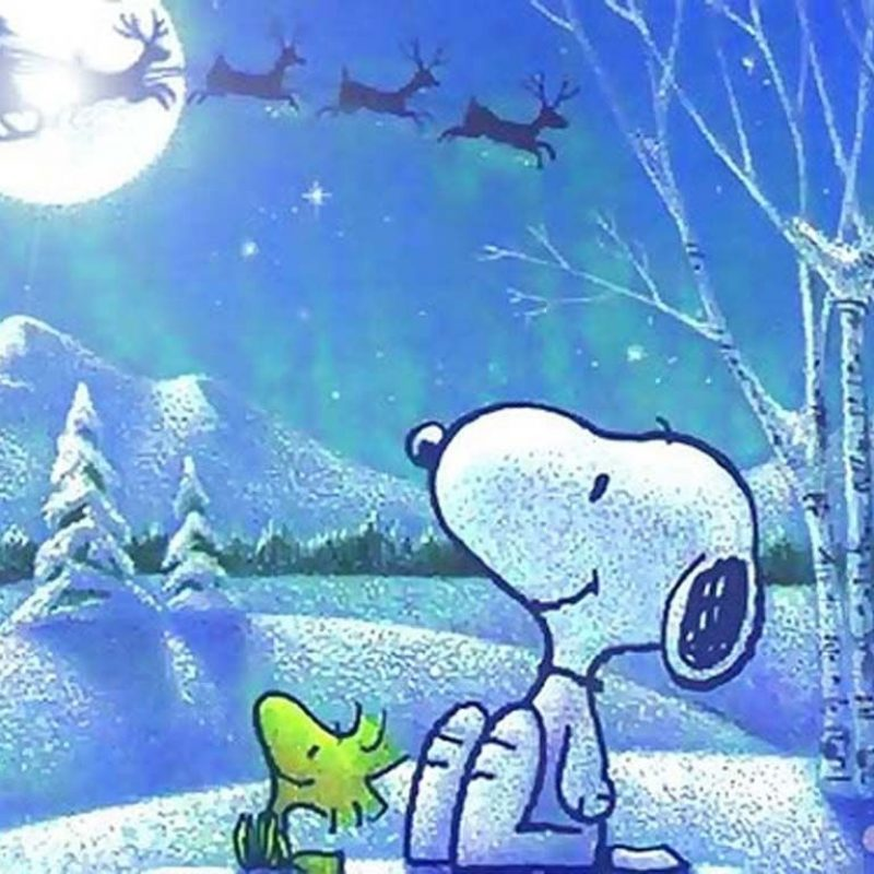 10 Top Snoopy Christmas Wallpaper Free FULL HD 1080p For PC Background 2020 free download free snoopy christmas wallpaper page 1 mafalda pinterest 800x800