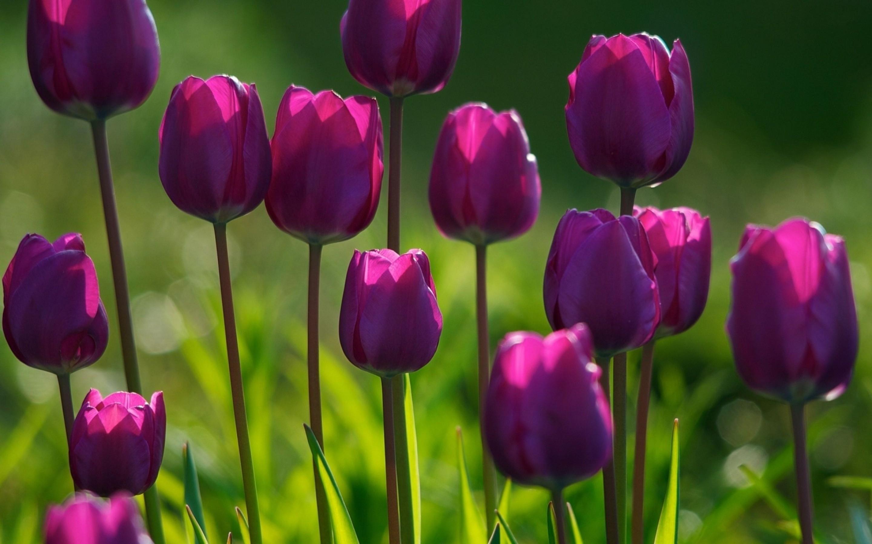 free spring screensavers 21548 2880x1800 px ~ hdwallsource