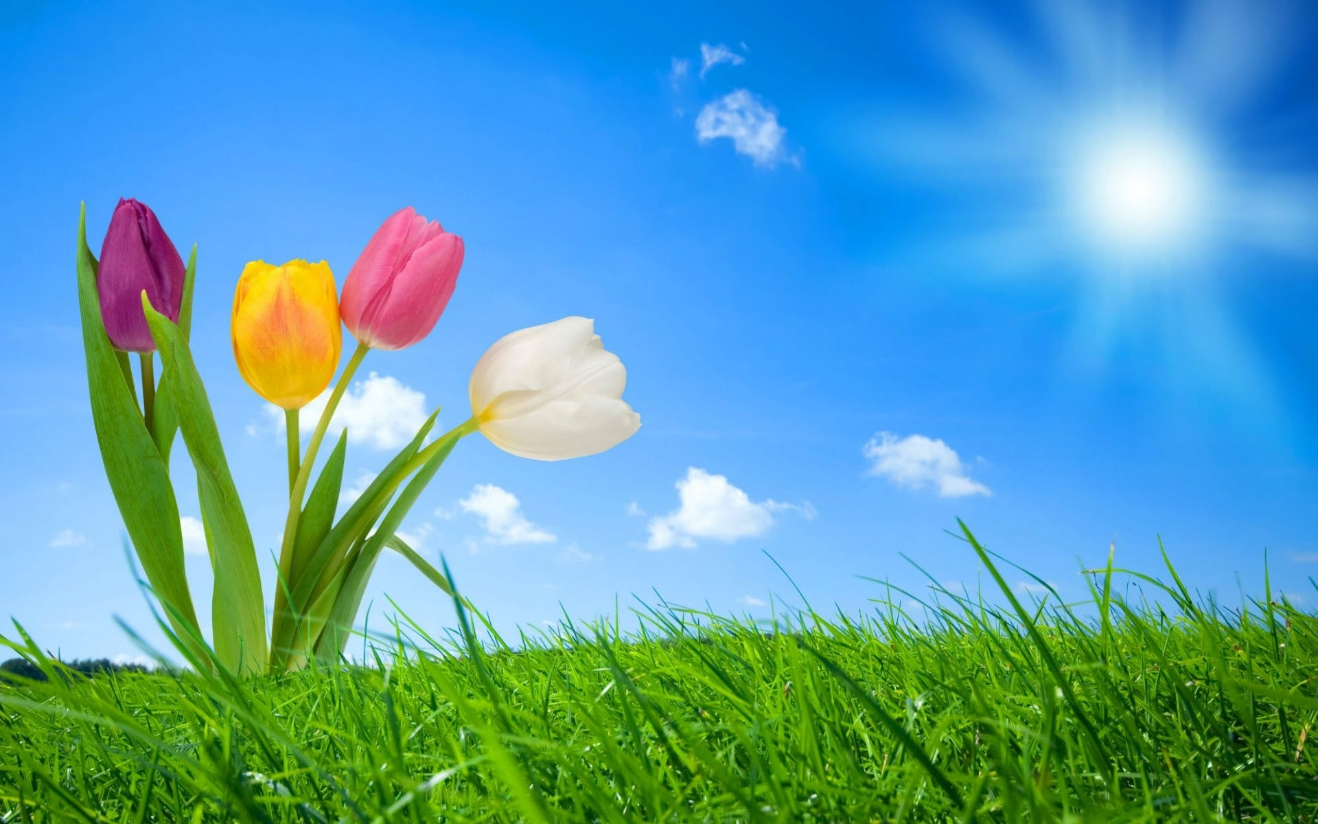 free spring wallpaper backgrounds | 2012 nature wallpapers. all