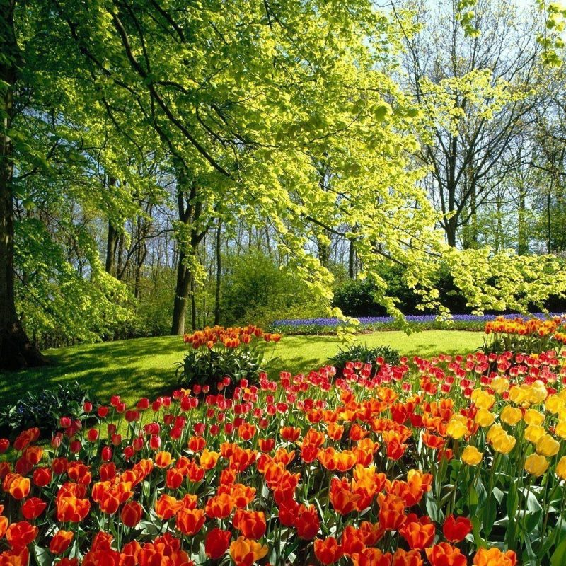 10 New Free Spring Screensavers And Wallpaper Full Hd 1920 1080 For