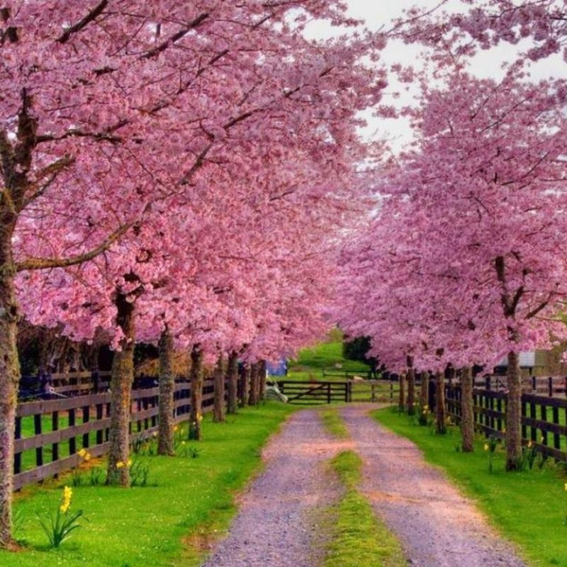 10 New Free Spring Screensavers And Wallpaper FULL HD 1920×1080 For PC Desktop 2020 free download free spring wallpapers and screensavers wallpaper cave 800x800