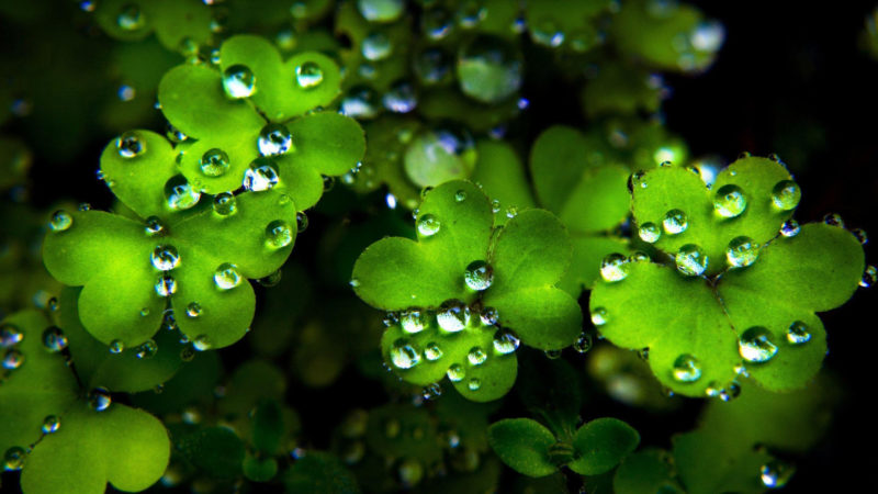 10 Best Free St Patrick Day Wallpaper Desktop FULL HD 1080p For PC Background 2018 free download free st patricks day wallpapers wallpaper cave 10 800x450