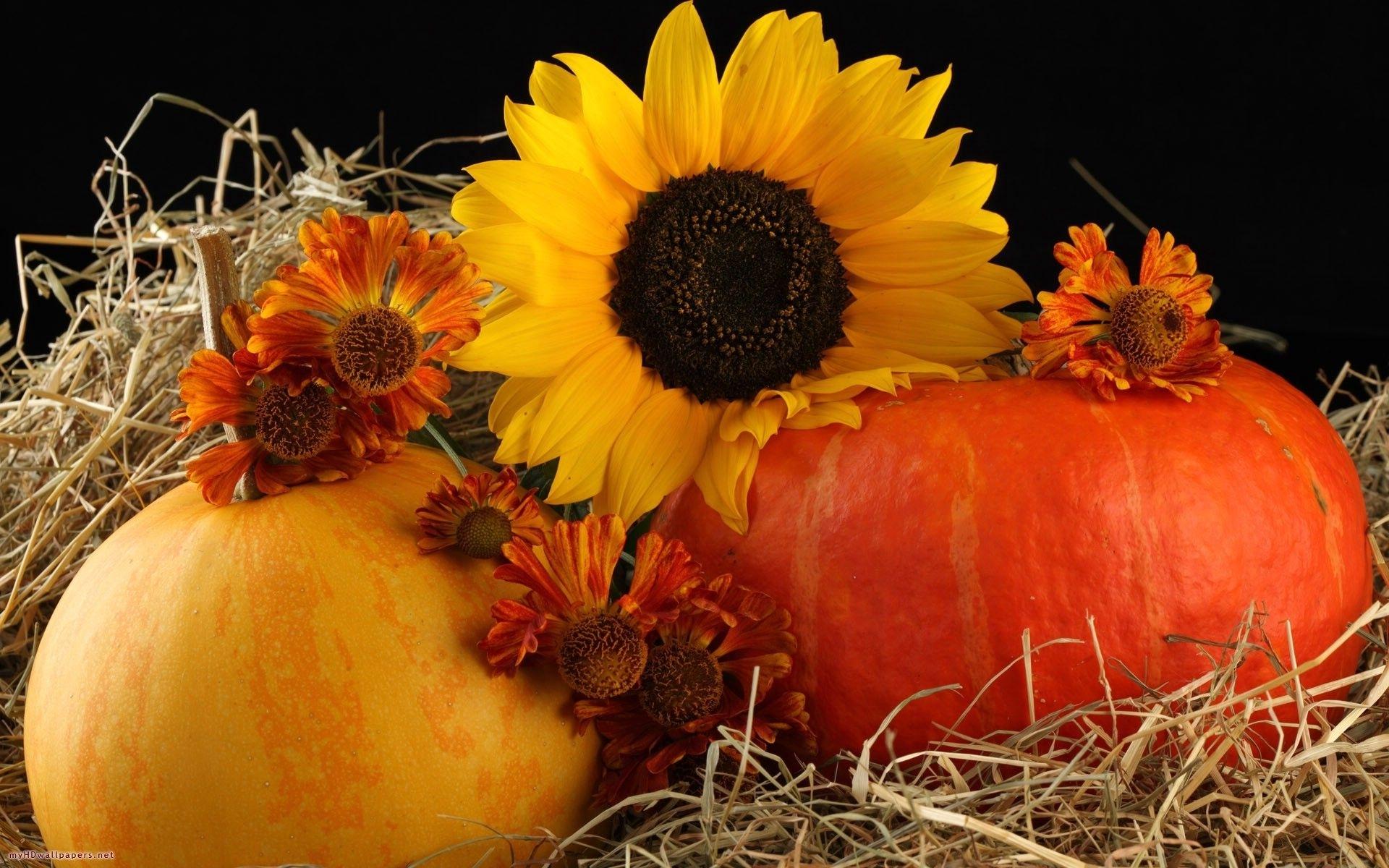 free sunflower desktop wallpaper, hd wallpapers download and new