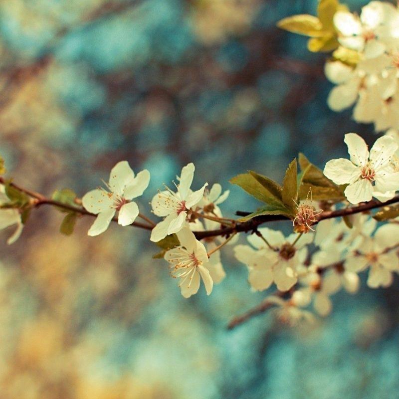 10 Most Popular Desktop Wallpaper Flowers Vintage FULL HD 1920×1080 For PC Background 2018 free download free vintage flower backgrounds long wallpapers 800x800