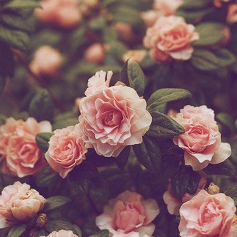 10 Best Desktop Backgrounds Flowers Vintage FULL HD 1080p For PC Desktop 2020 free download free vintage flower picture long wallpapers 4 800x800