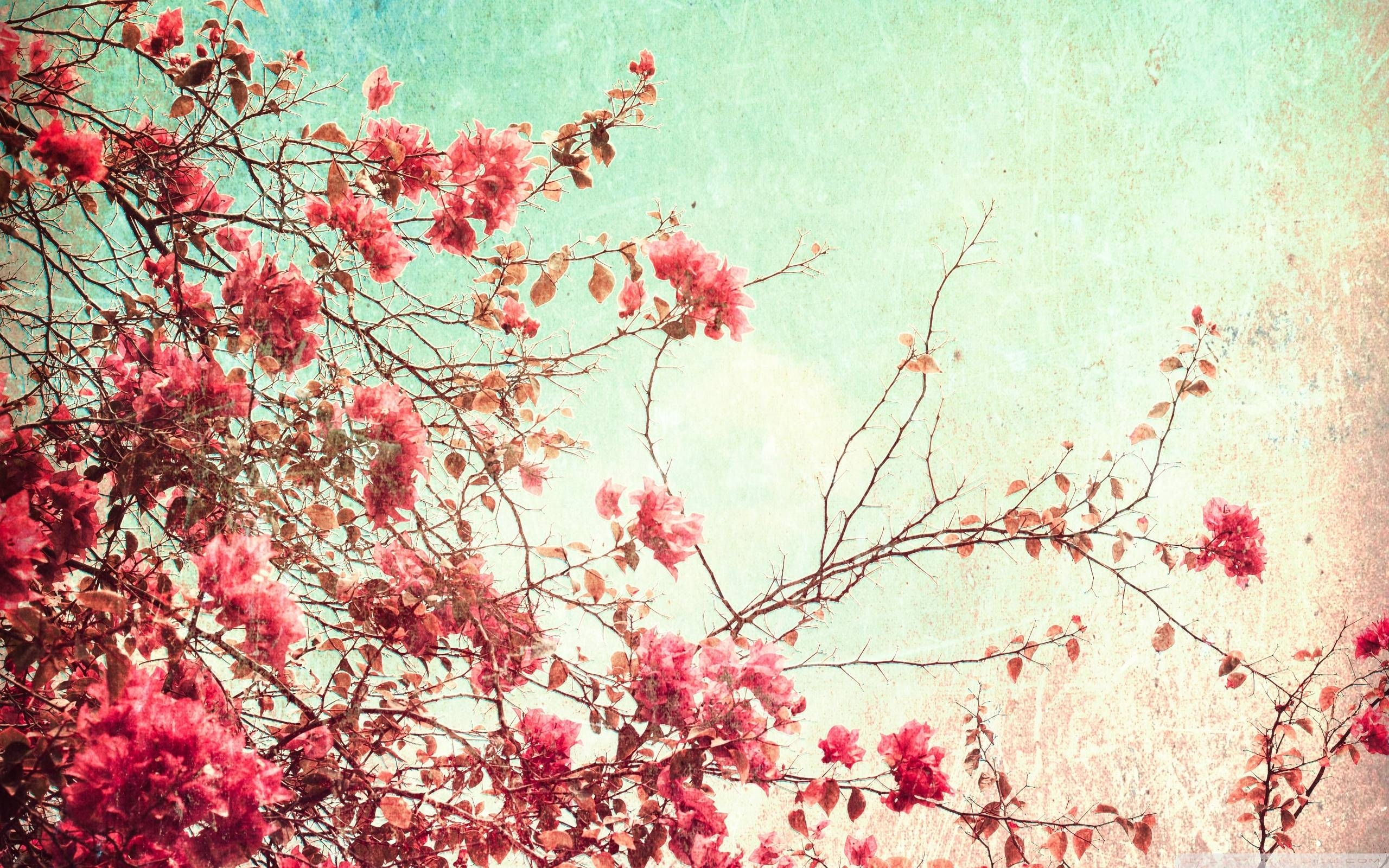 free vintage flower wallpapers high resolution « long wallpapers