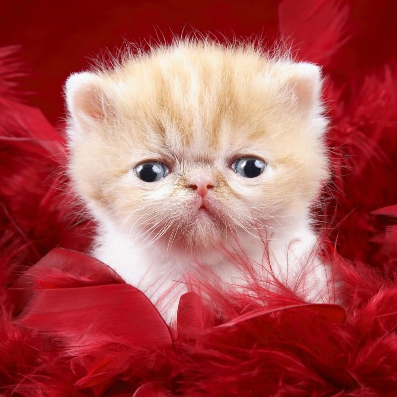 10 Most Popular Cute Animal Wallpapers Free FULL HD 1080p For PC Background 2020 free download free wallpaper free animal wallpaper cute animals 1 wallpaper 1 800x800