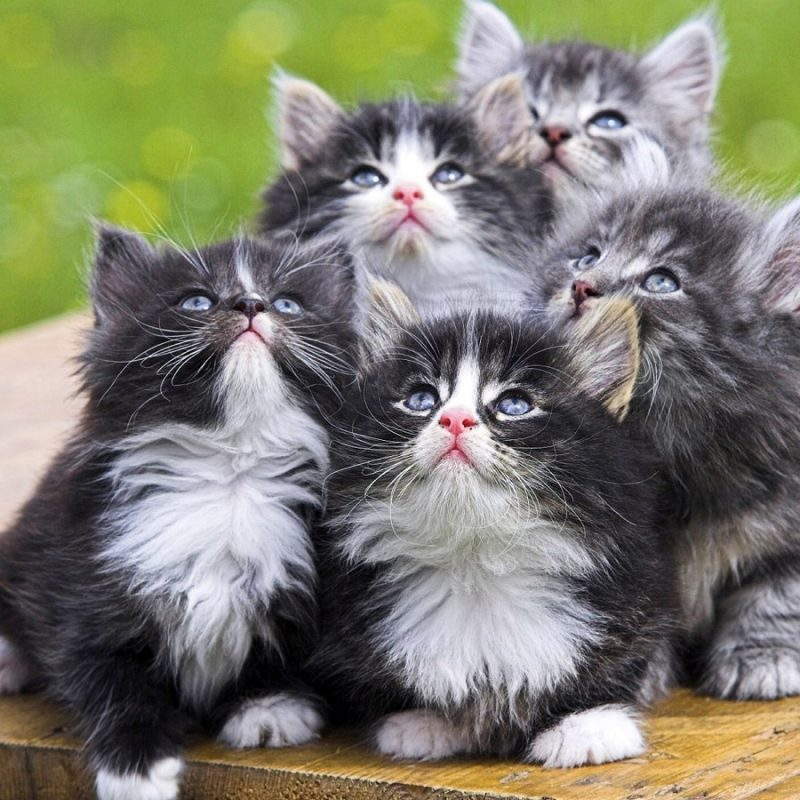 10 Most Popular Cute Animal Wallpapers Free FULL HD 1080p For PC Background 2020 free download free wallpaper free animal wallpaper cute animals 1 wallpaper 2 800x800
