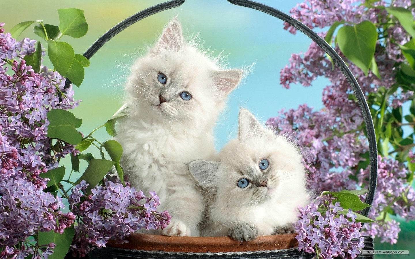 free wallpaper - free animal wallpaper - cute animals 1 wallpaper