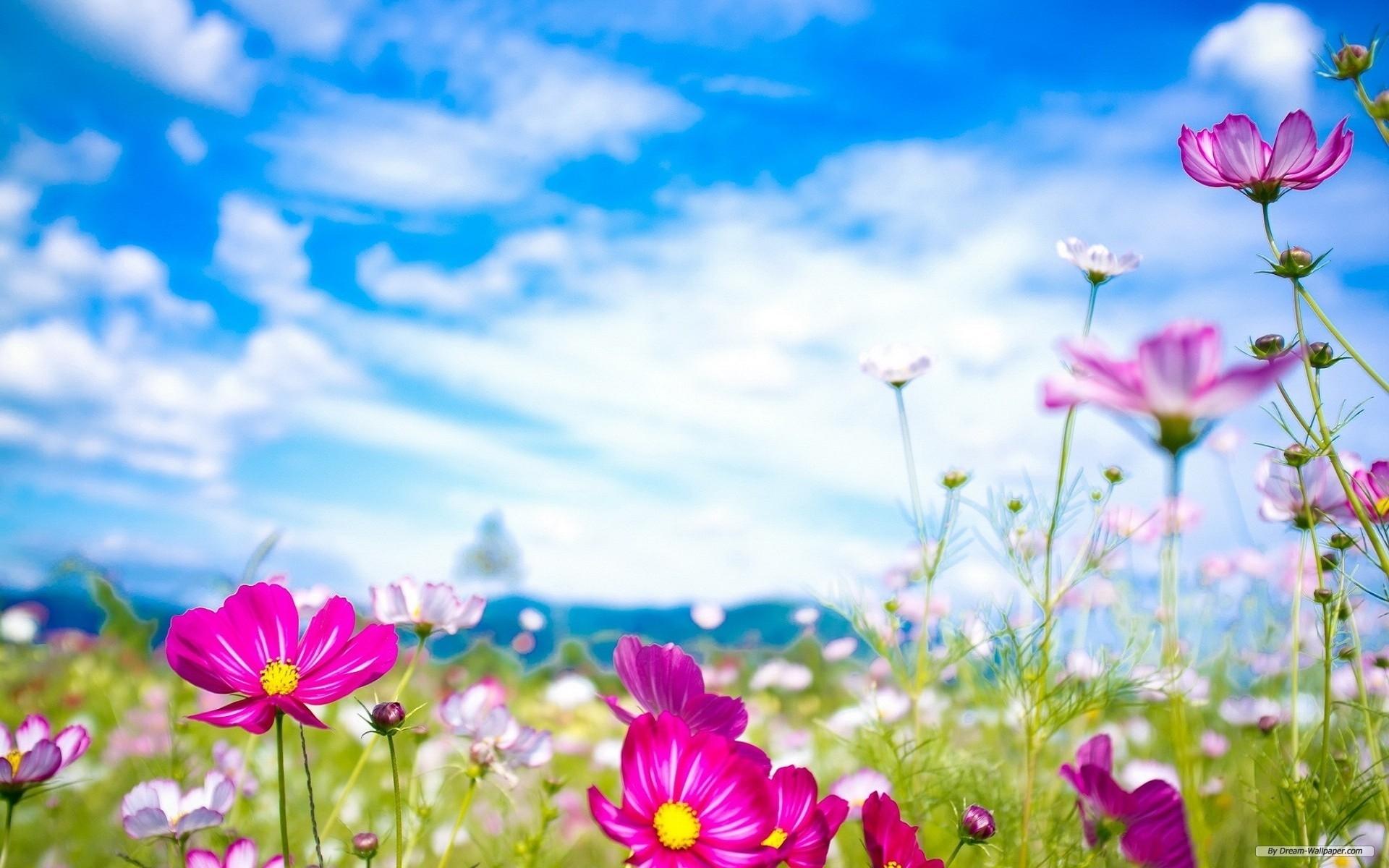 free wallpaper - free flower wallpaper - spring wildflowers