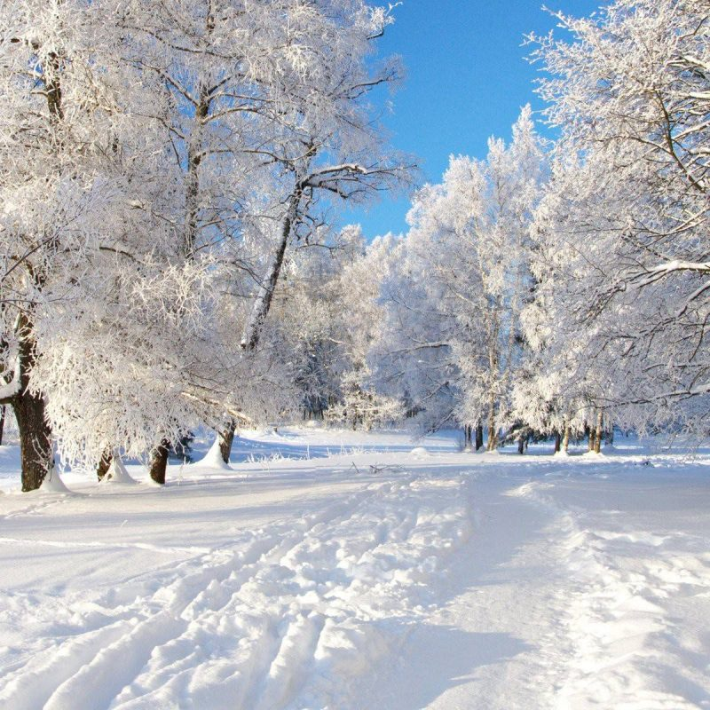 10 Latest Winter Screensavers And Wallpapers FULL HD 1920×1080 For PC Background 2018 free download free winter backgrounds wallpapers wallpaper cave 800x800