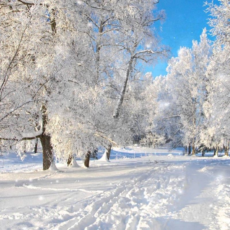 10 New Free Winter Screensaver Pictures FULL HD 1920×1080 For PC Background 2020 free download free winter screensaver nfssnowyforest youtube 800x800