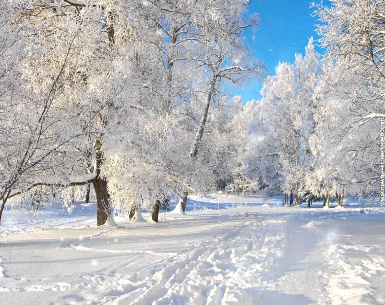 free winter screensaver nfssnowyforest - youtube