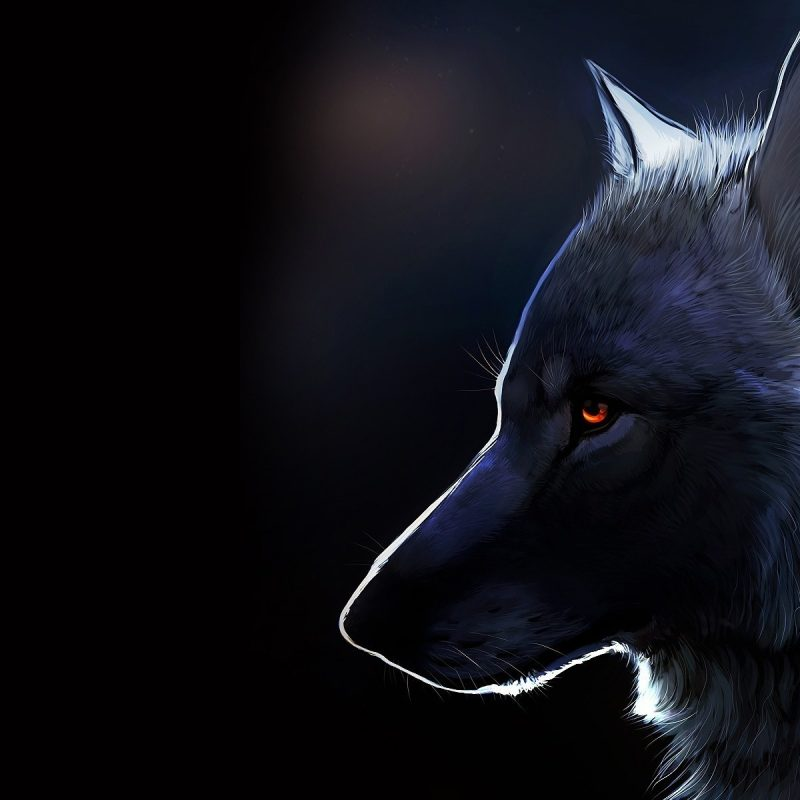 10 Latest Wolf Desktop Wallpaper Hd FULL HD 1920×1080 For PC Desktop 2018 free download %name