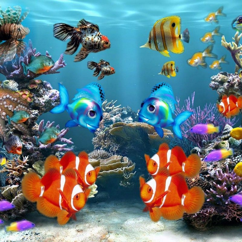 10 Latest Tropical Fishes Wallpapers Hd FULL HD 1080p For PC Desktop 2018 free download freshwater tropical fish wallpaper freshwater fish pinterest 800x800