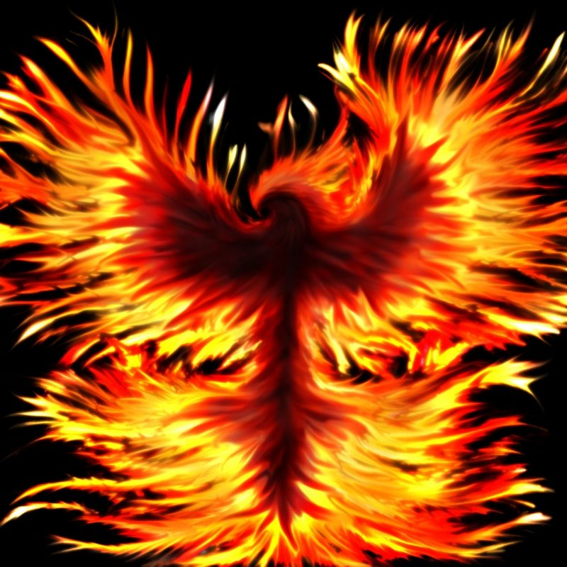10 New Phoenix Rising From The Ashes Wallpaper FULL HD 1080p For PC Background 2018 free download from the ashesrise anewkerberos of hades on deviantart 800x800