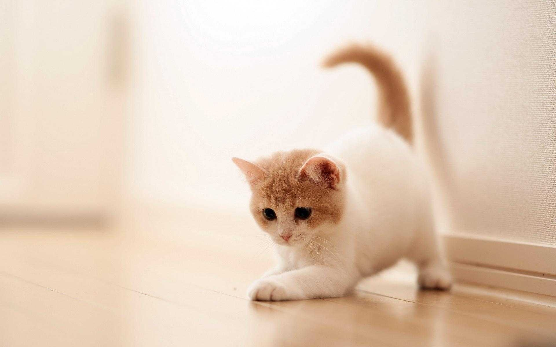 full hd for cute baby cat wallpaper cats high resolution smartphone