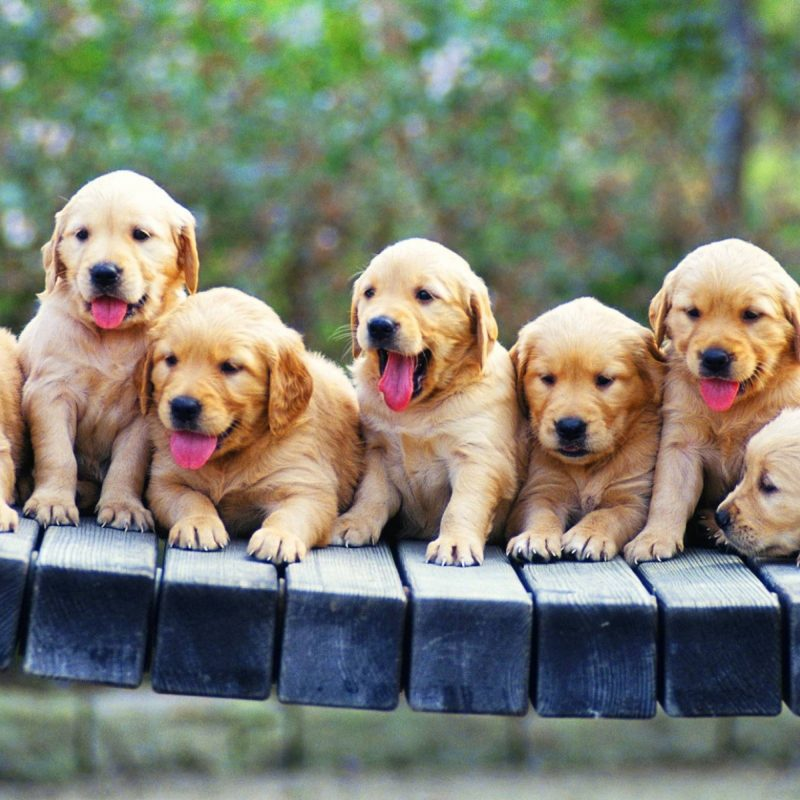 10 Most Popular Puppies Wallpaper Free Download FULL HD 1080p For PC Desktop 2018 free download full hd images free download 1 800x800