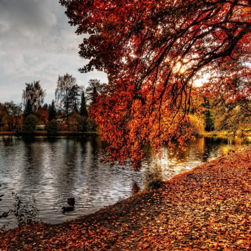10 New Nature Wallpapers Hd 1920x1080 Full Hd 1920 1080 For