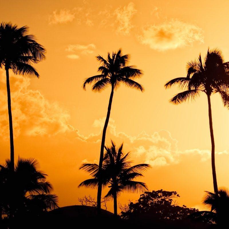 10 Best Palm Trees Wallpaper Hd FULL HD 1080p For PC Background 2018 free download full hd p palm trees wallpapers hd desktop backgrounds hd 800x800