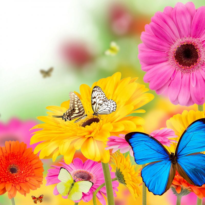 10 Latest Flowers And Butterflies Wallpaper FULL HD 1080p For PC Desktop 2021 free download funmozar spring flowers and butterflies wallpapers butterflies 800x800