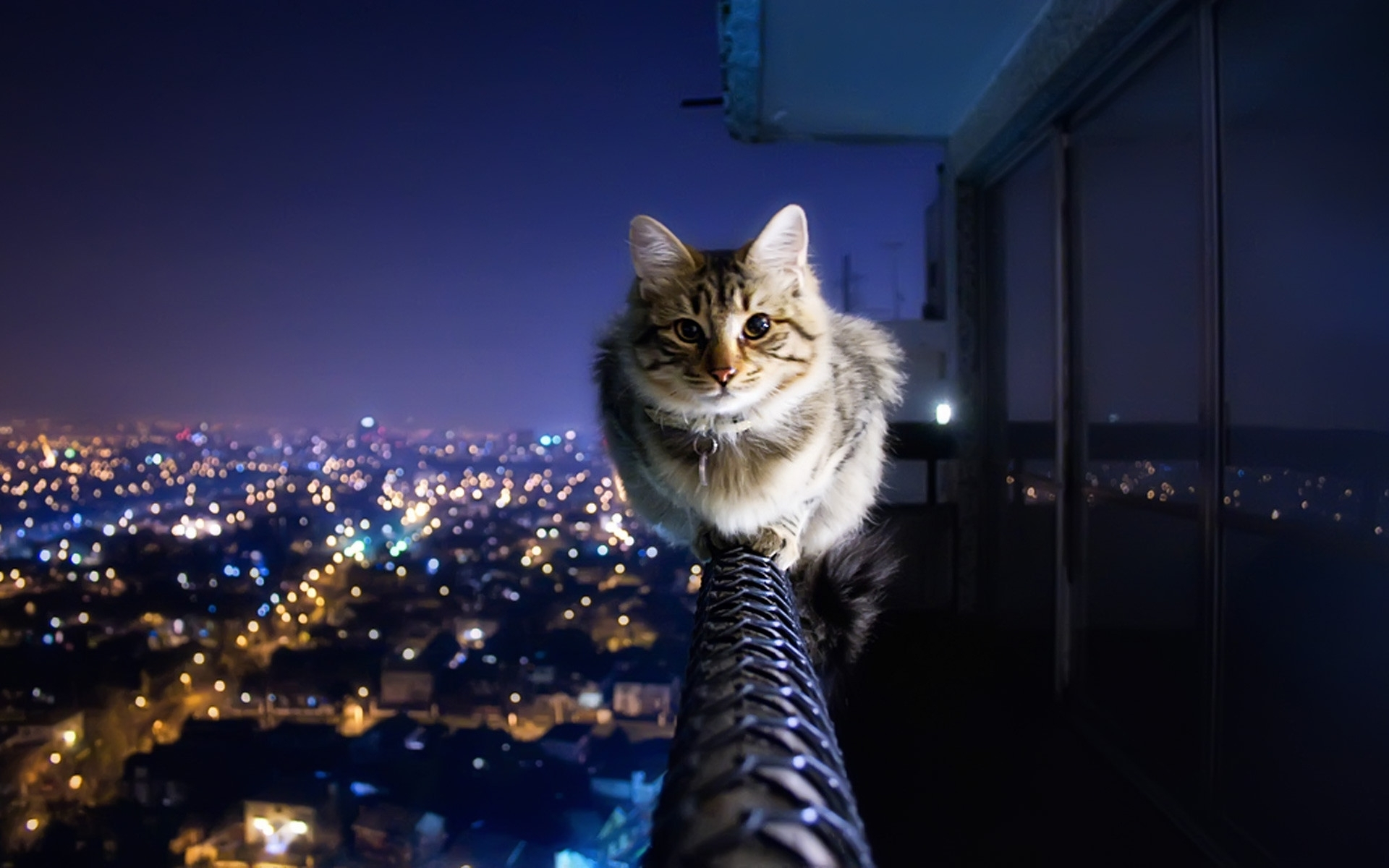 funny cat desktop wallpaper ·①